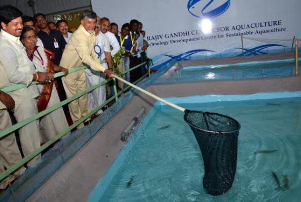 andhra-marine-and-aqua-exports